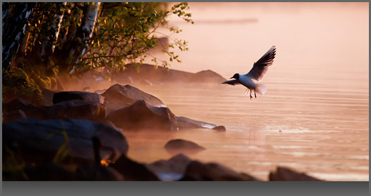 Image of a bird flying above water